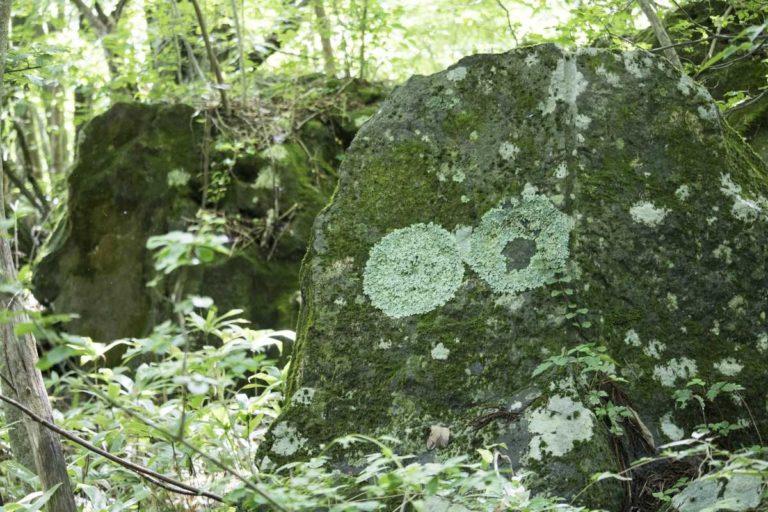 模様が浮き出ている岩